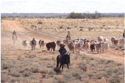 Anna Creek Sale