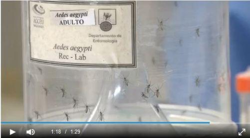OZ Zika