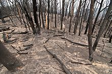 Kilmore Fire 2009