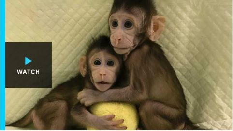 MonkeyClone