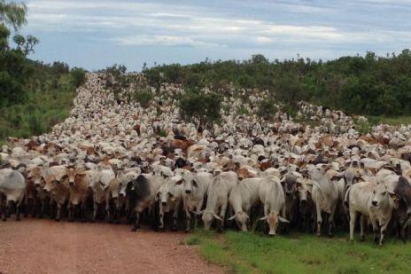 Cattle Farm2